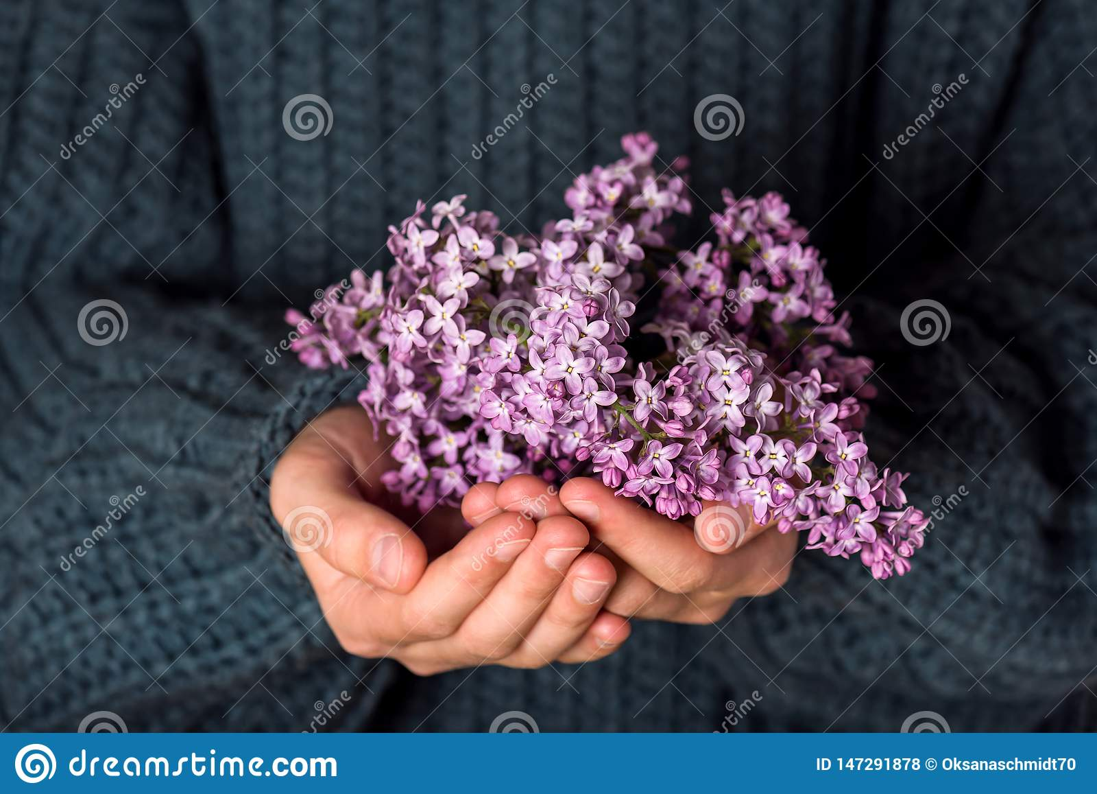 H?rlig bukett av purpurf?rgade lila blommor i flickah?nder