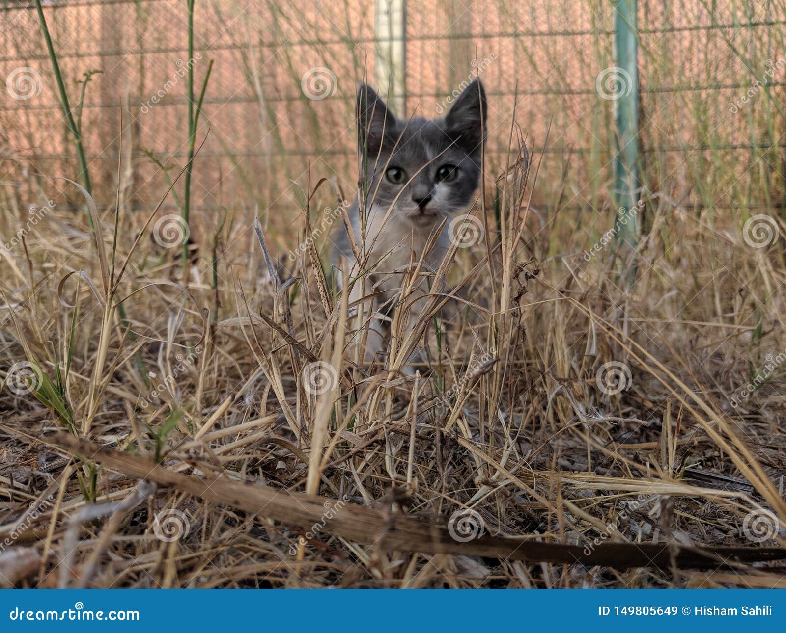 H?rlig katt