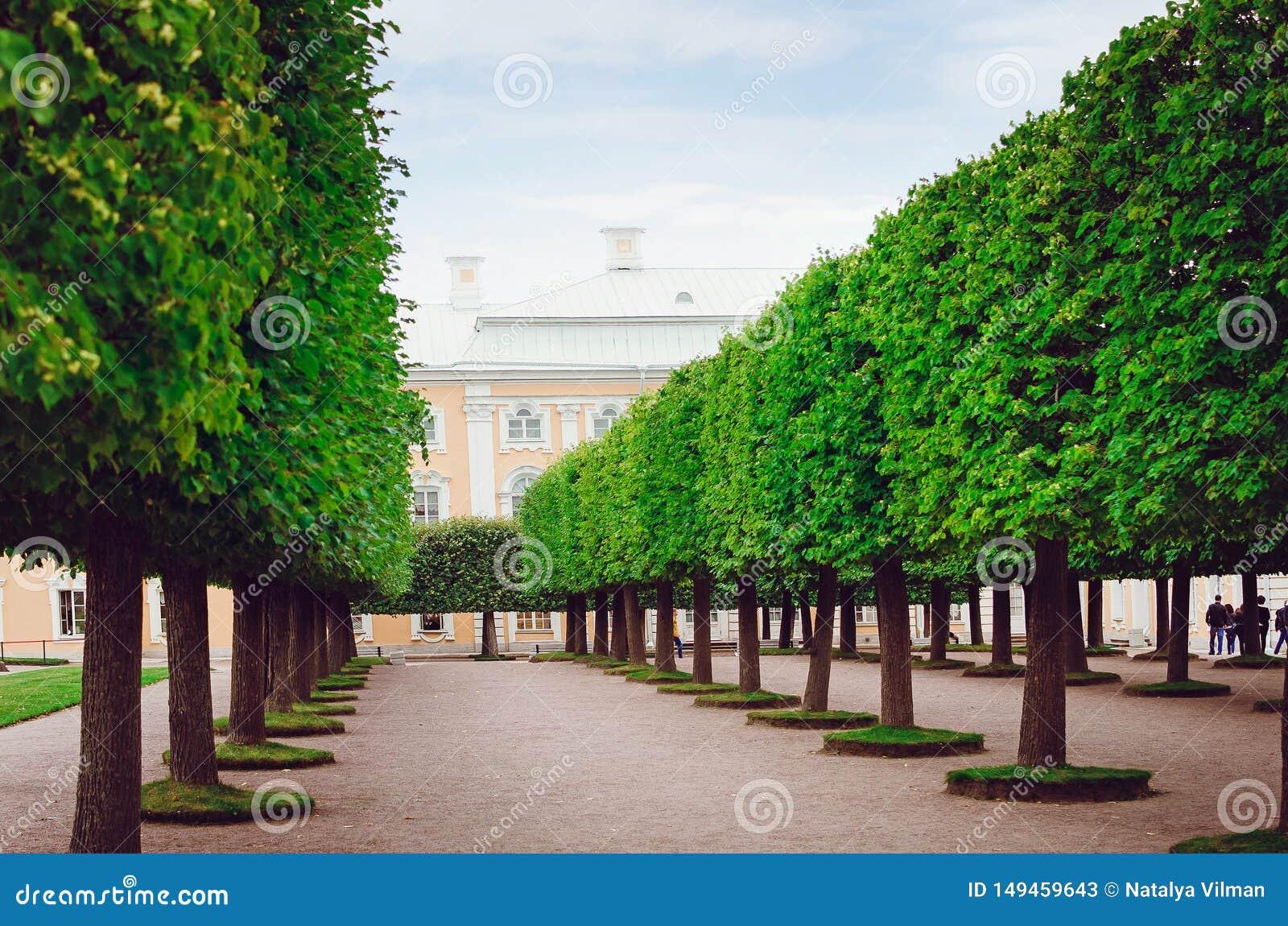 H?rligt parkera av vilar i Peterhof i St Petersburg