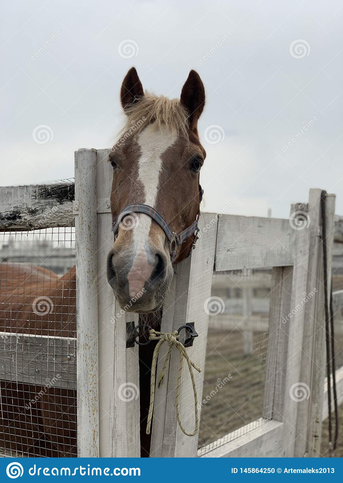 H?st i stablen