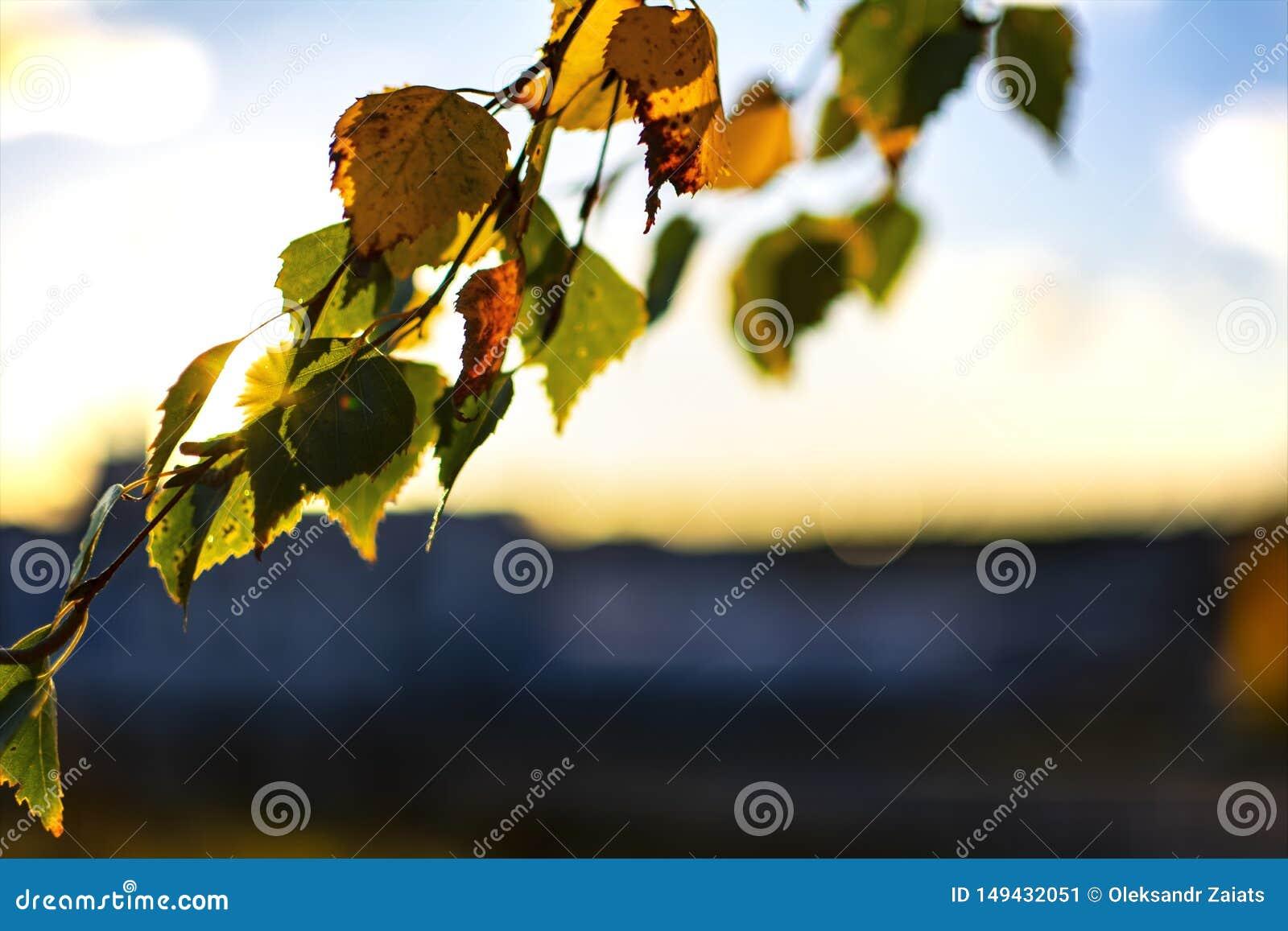 H?stsidor p? solnedg?ngen p? bakgrunden av staden Höstlynnet, nedgångvibesen, höstträd i solljus, nedgång, parkerar