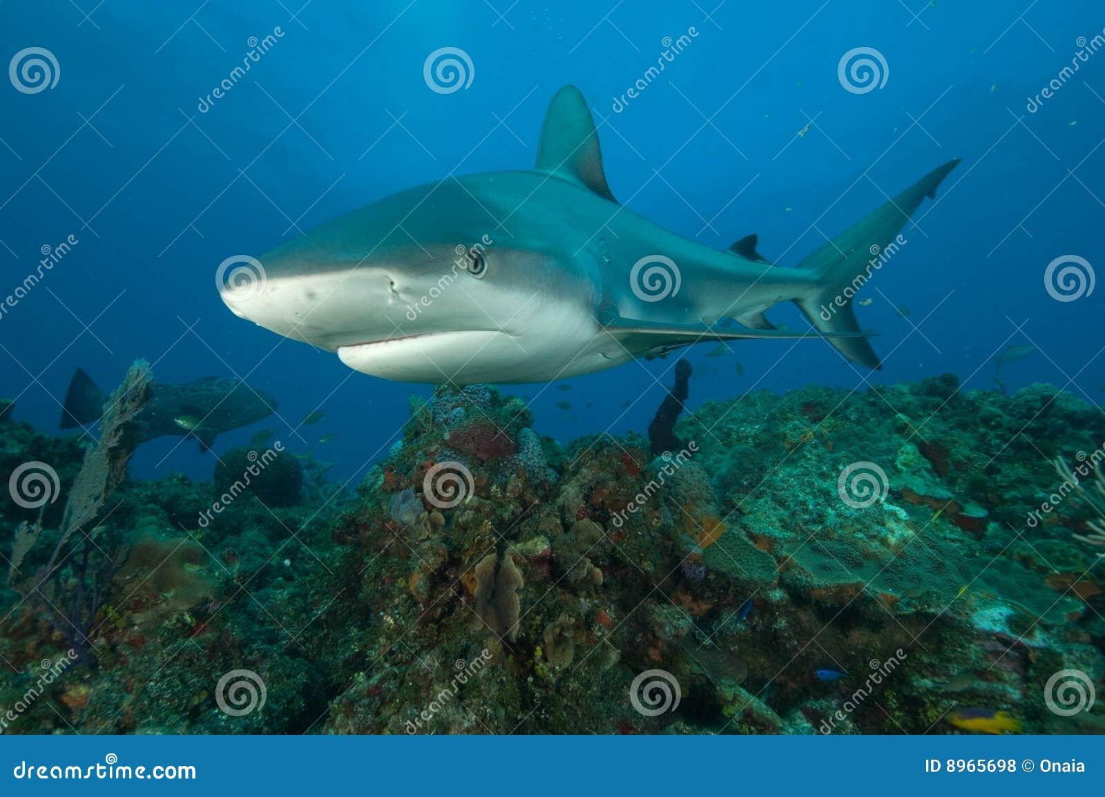 Haai op een ertsader