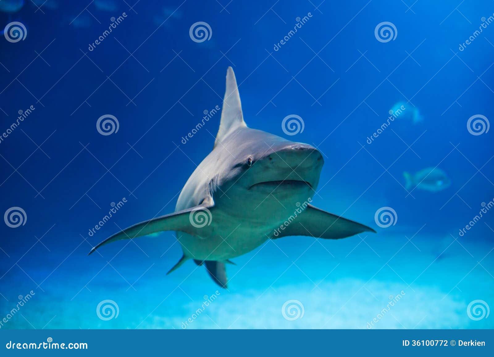 Haai in overzees