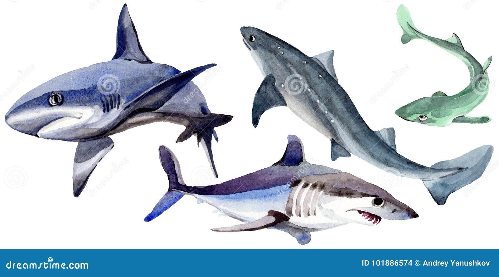 Haai wilde vissen in een geïsoleerde waterverfstijl