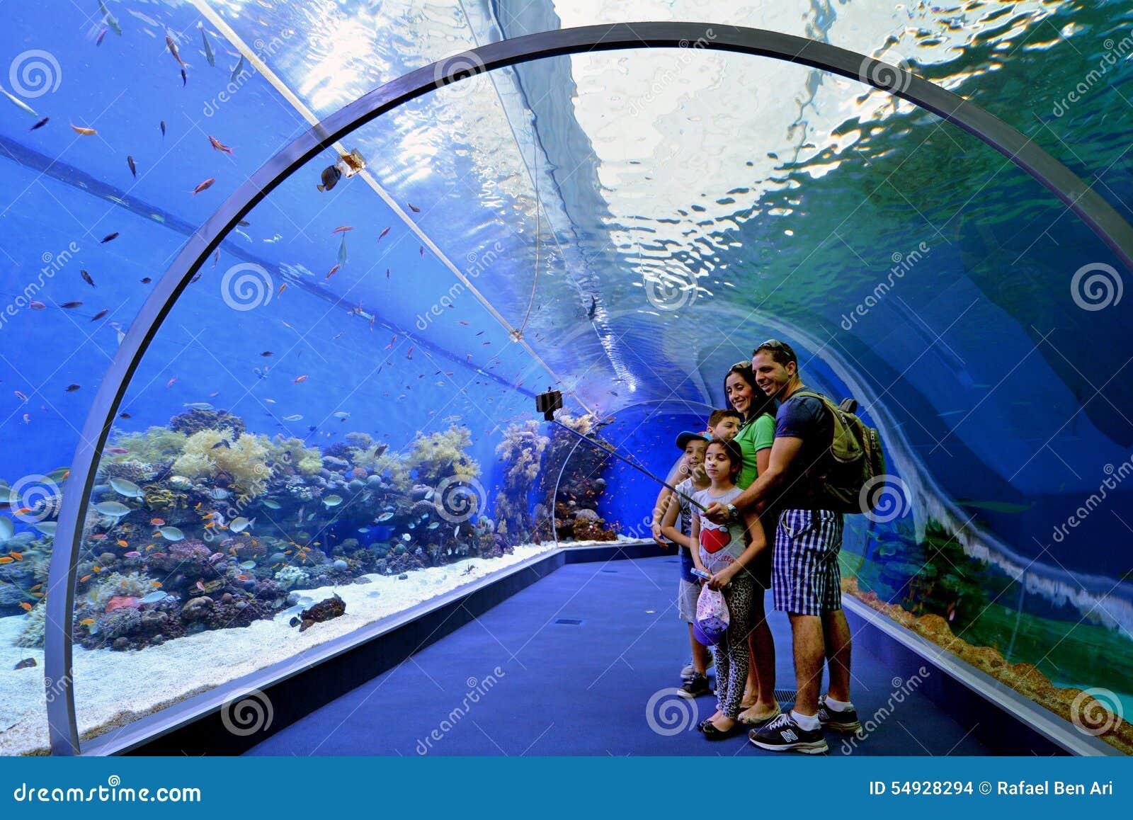 2015: Bezoekers in de Haaipool van Coral World Underwater Observatory ...