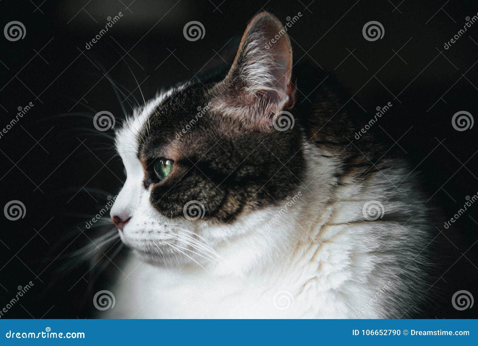 Haariges weißes Katzengrün gemustert