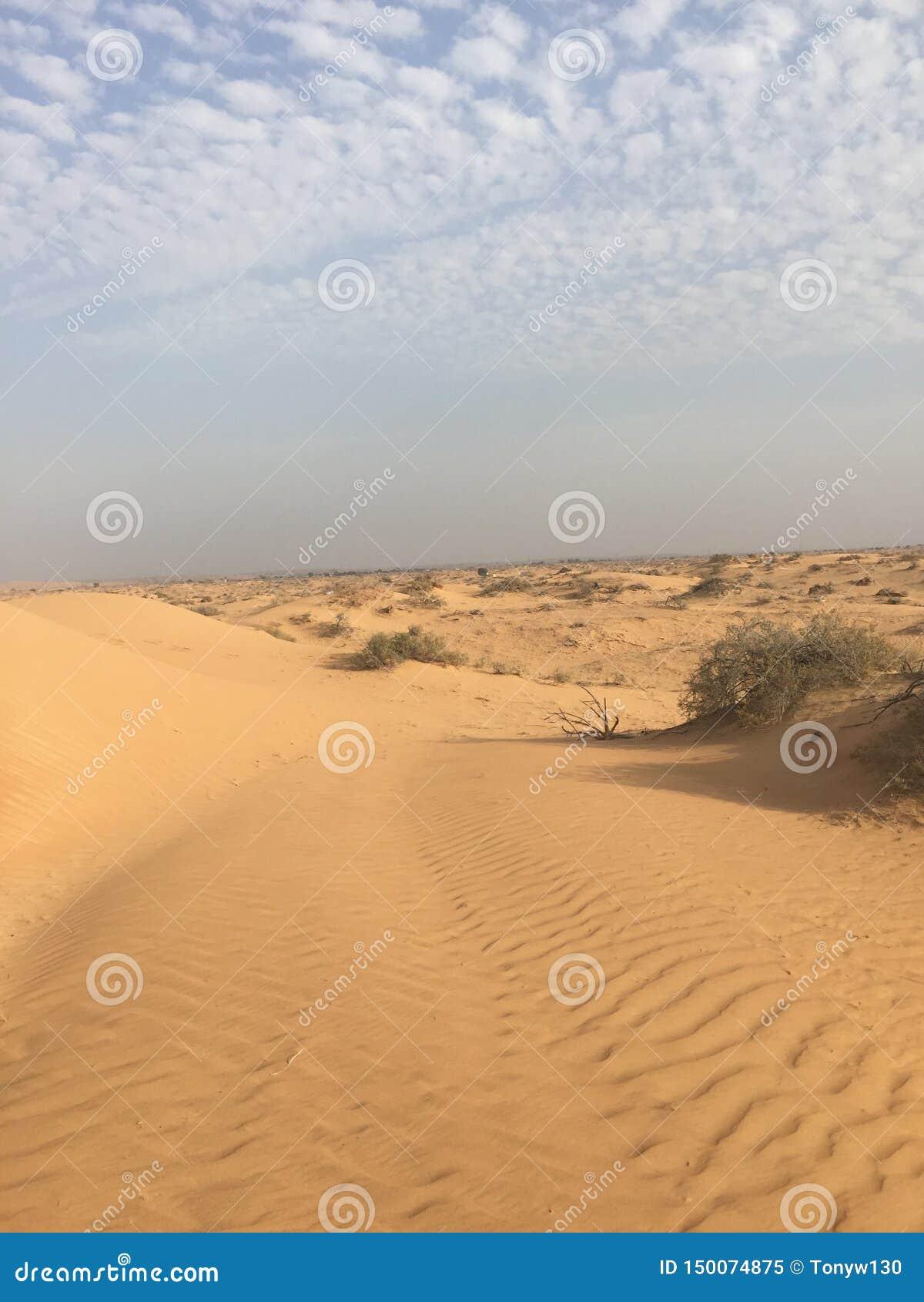 Had a look at desert