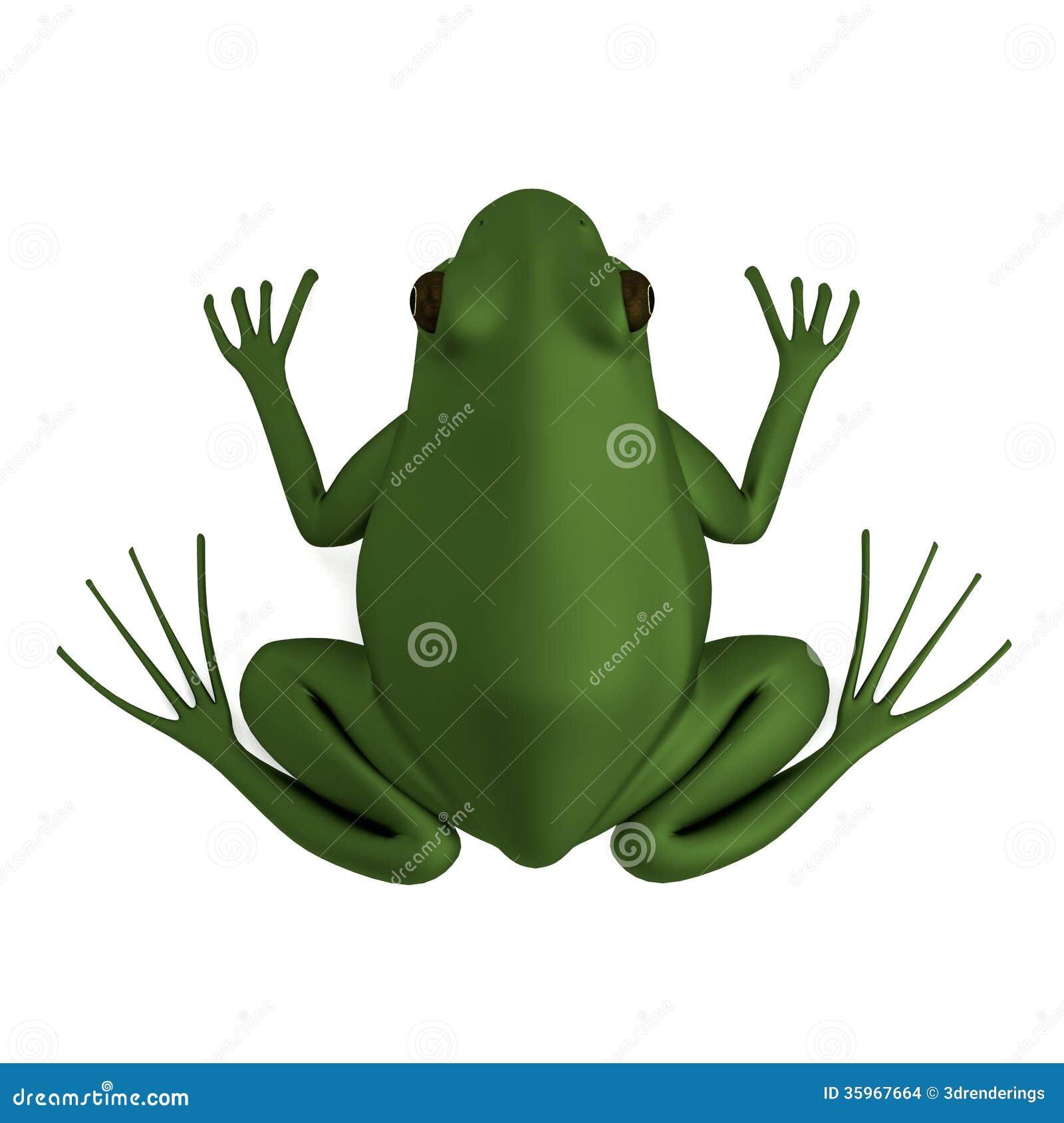 Haga de rana esculenta
