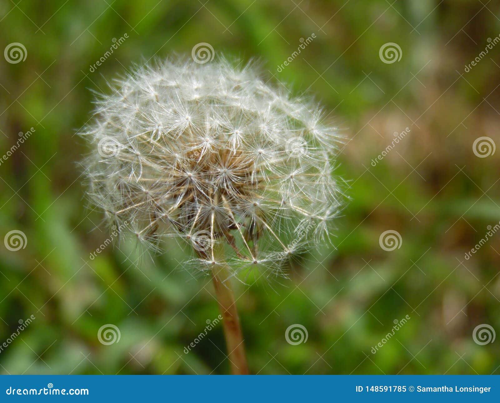 Haga un deseo