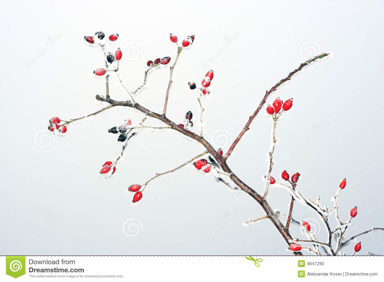 how to eat rose hips raw