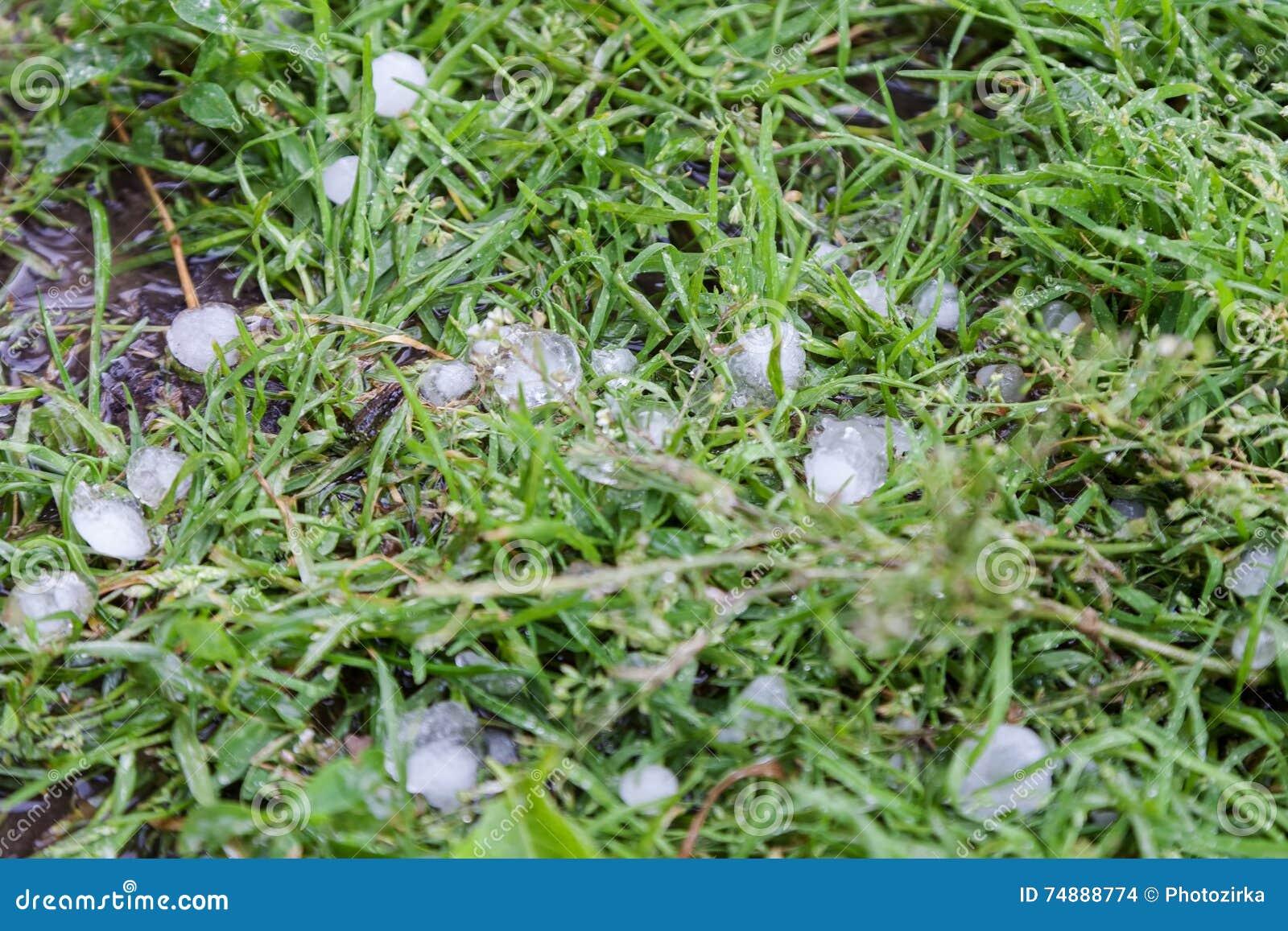 Gras In Tuin : Zo veel dorst heeft uw tuin moeten we ons gras wel besproei