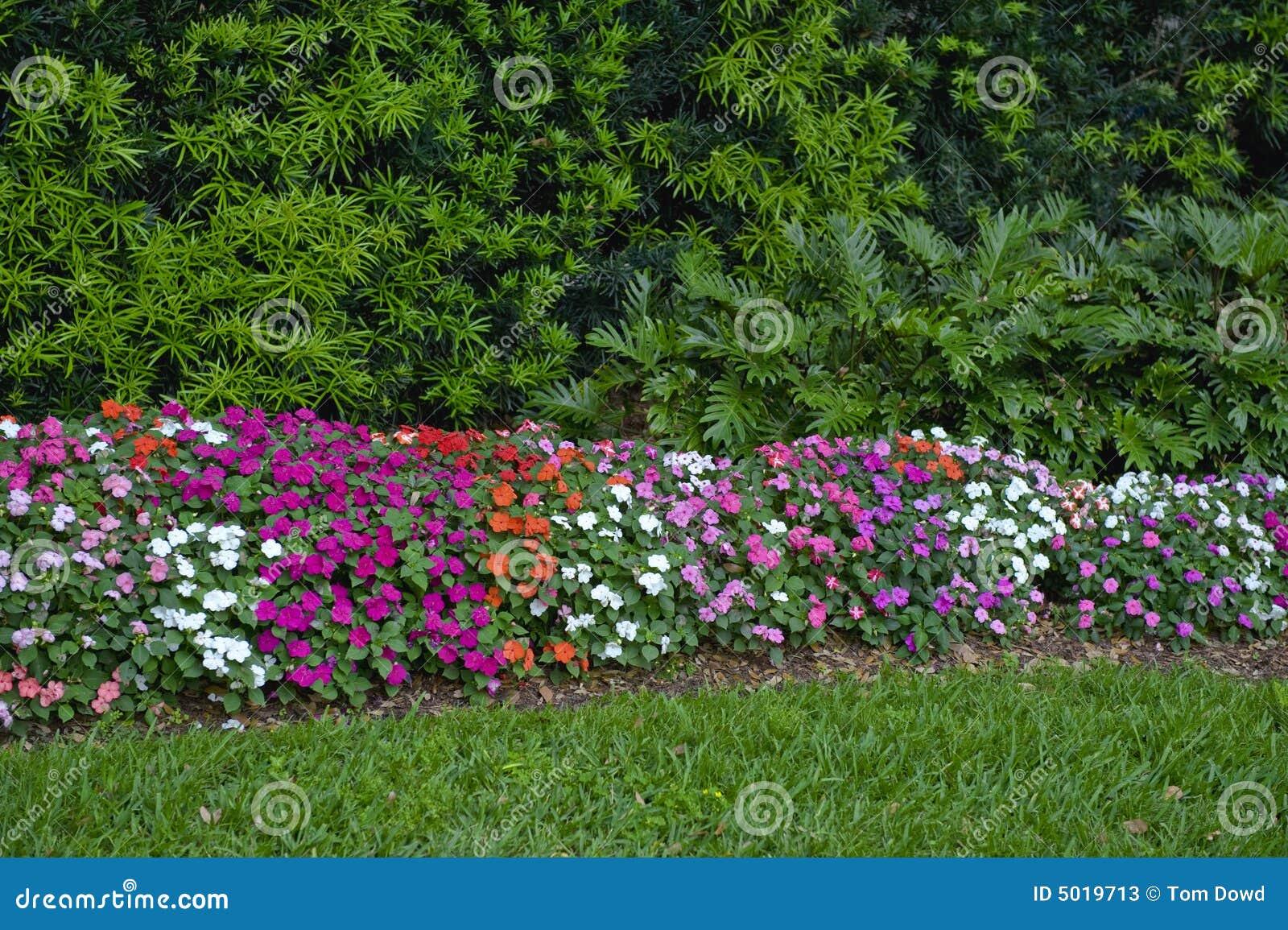 haie color e de fleur photos stock image 5019713. Black Bedroom Furniture Sets. Home Design Ideas