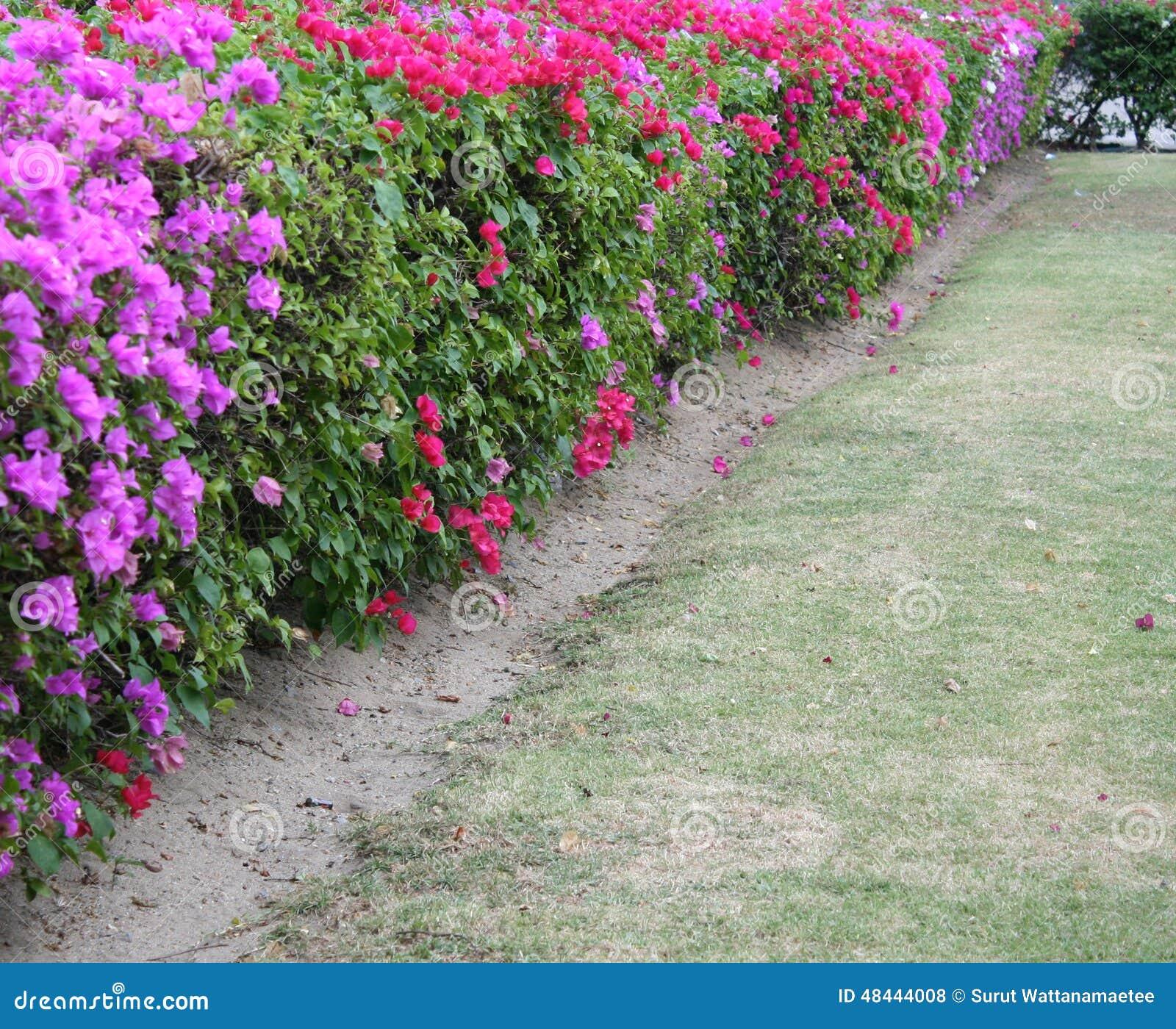 haie de fleur photo stock image du haie herbe lumineux 48444008. Black Bedroom Furniture Sets. Home Design Ideas