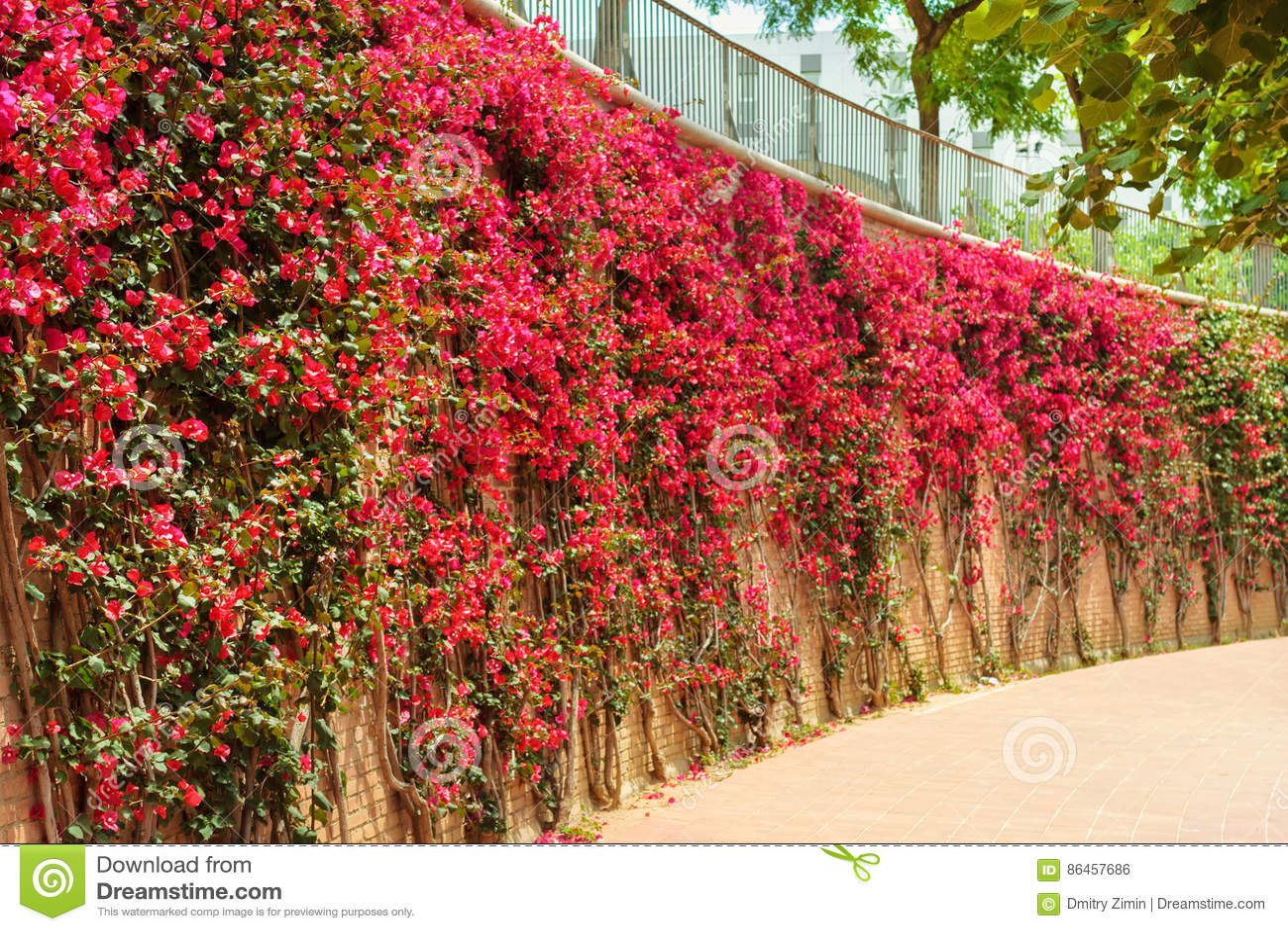 haie rouge de fleurs dehors photo stock image du lame fleur 86457686. Black Bedroom Furniture Sets. Home Design Ideas