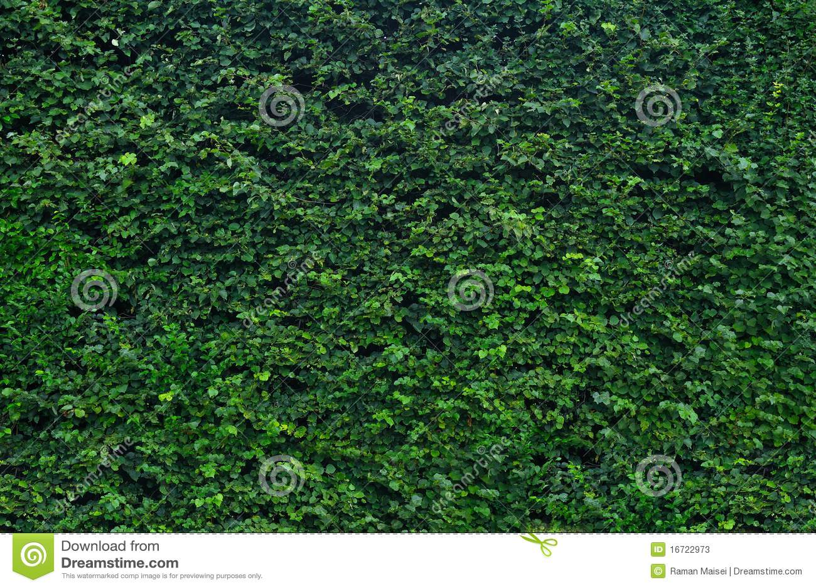 Haie verte de jardin image stock. Image du arbuste ...
