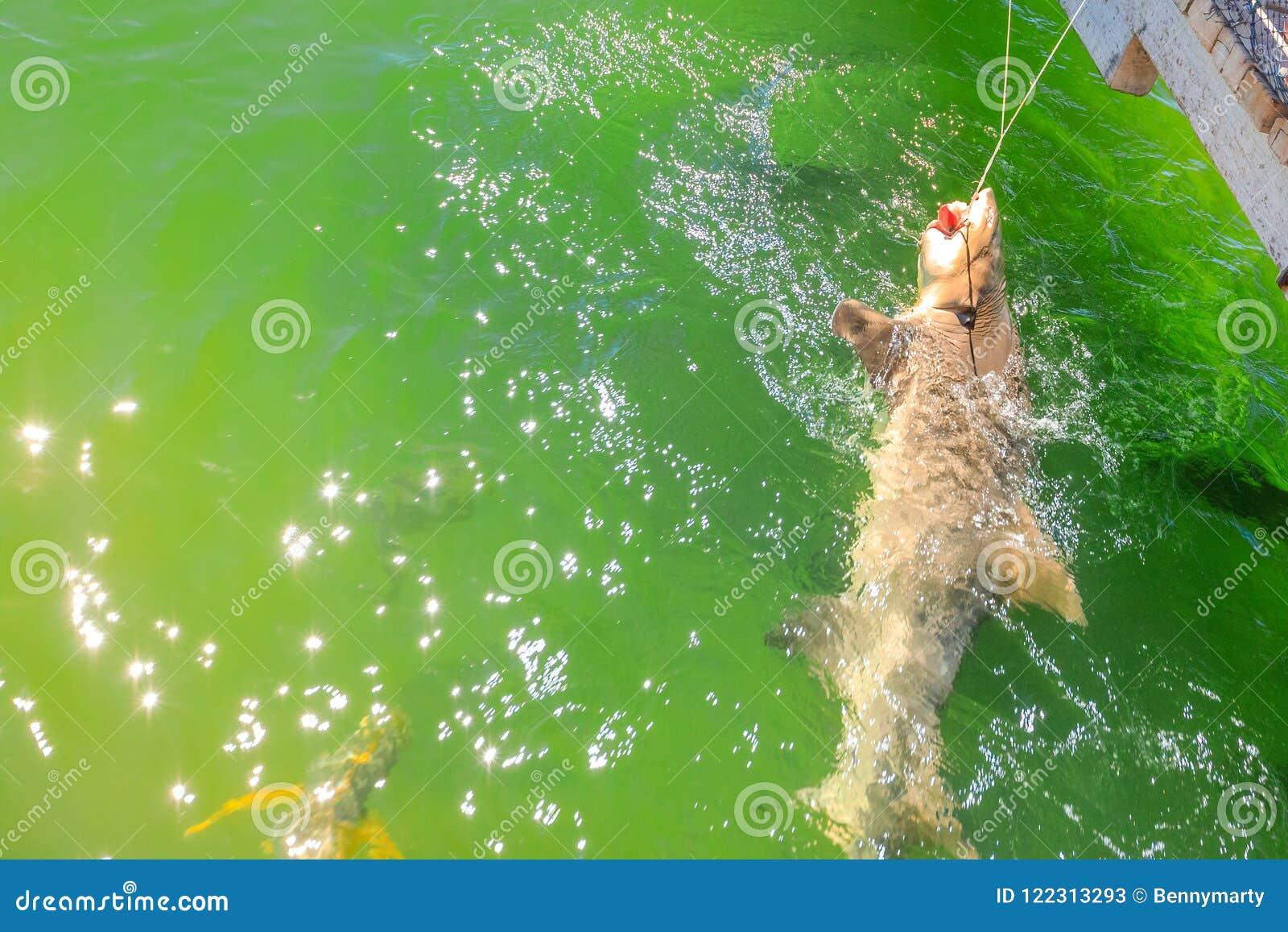 Haifisch, der WA antrifft