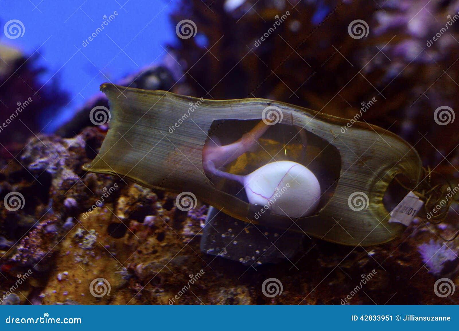 Haifisch Eier