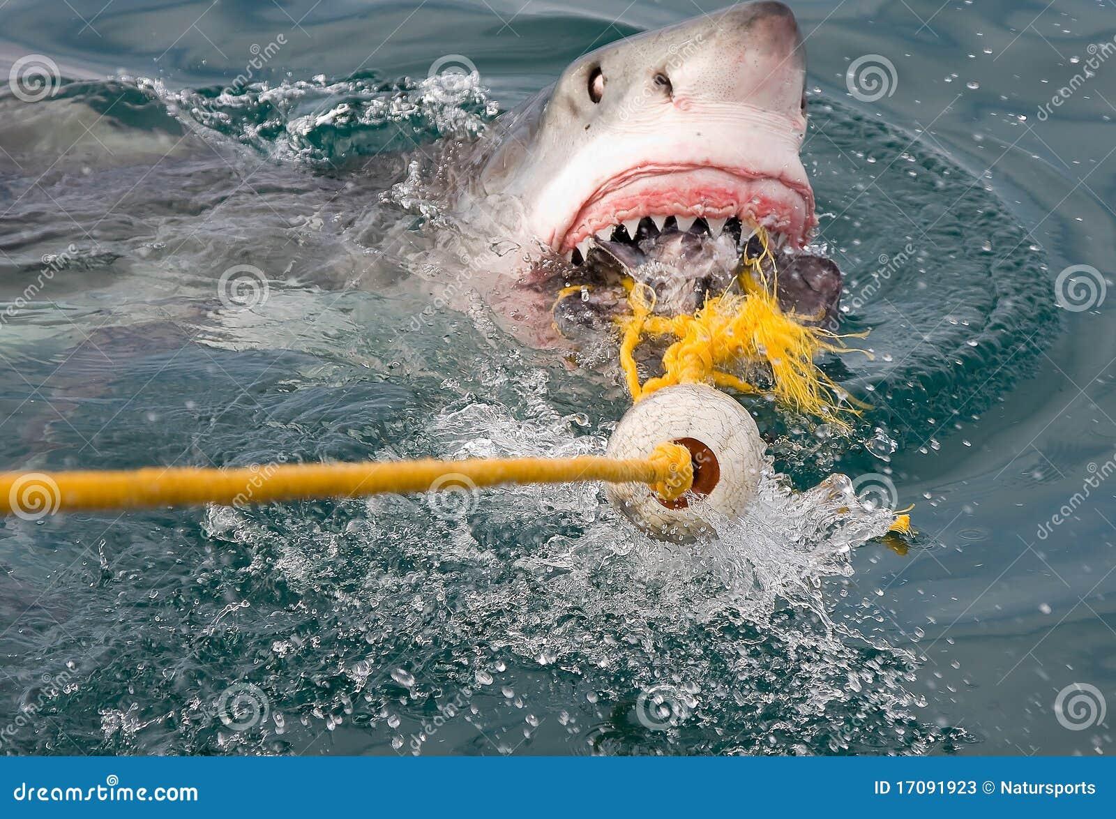 Haifischangriff