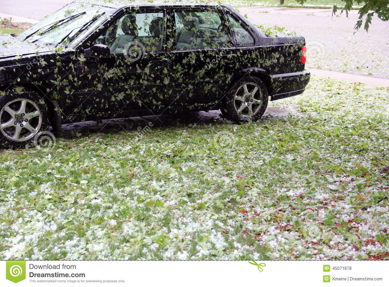 Can Tree Leaves Scratch Car Paint