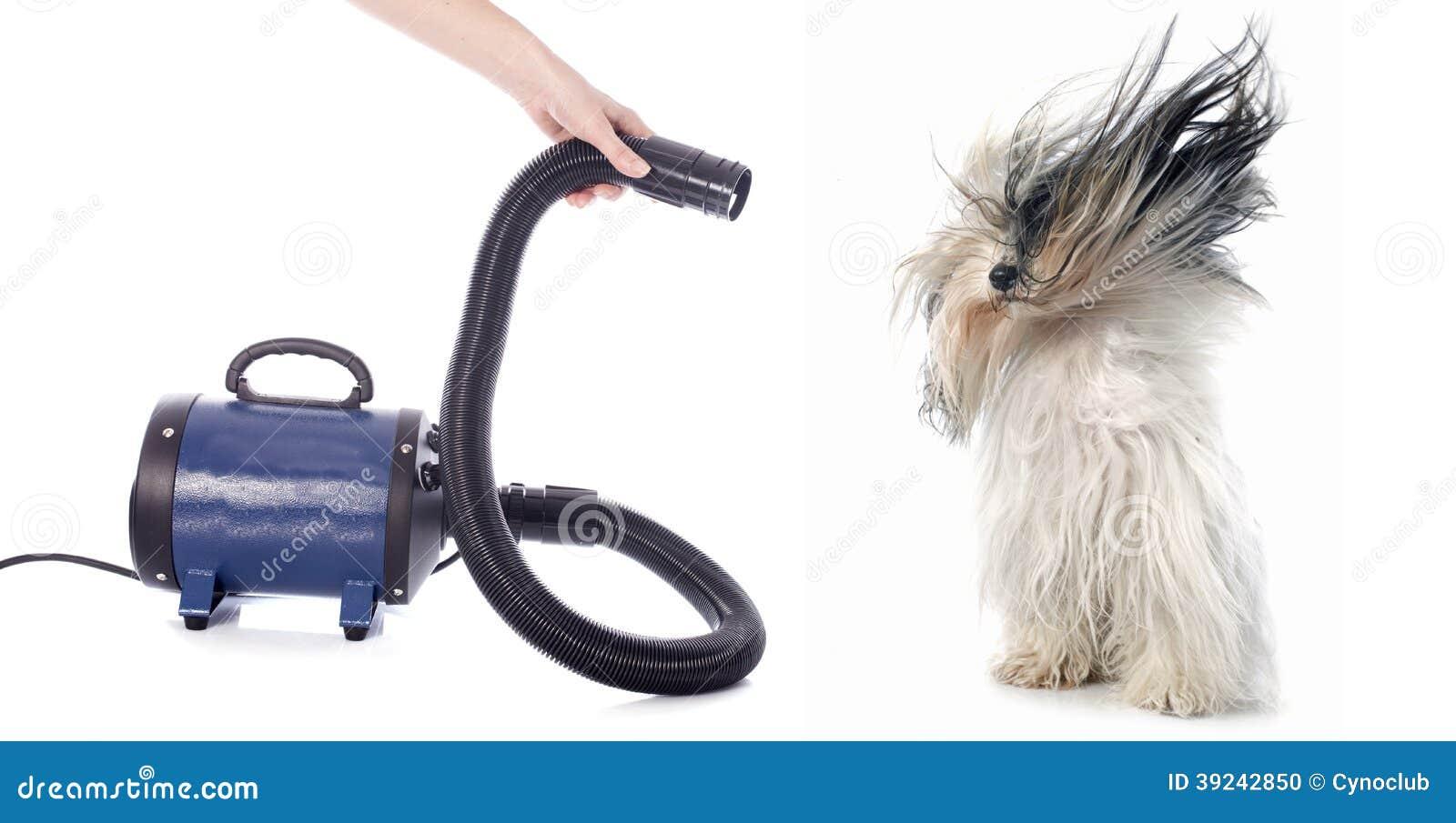 Hair dryer for dog