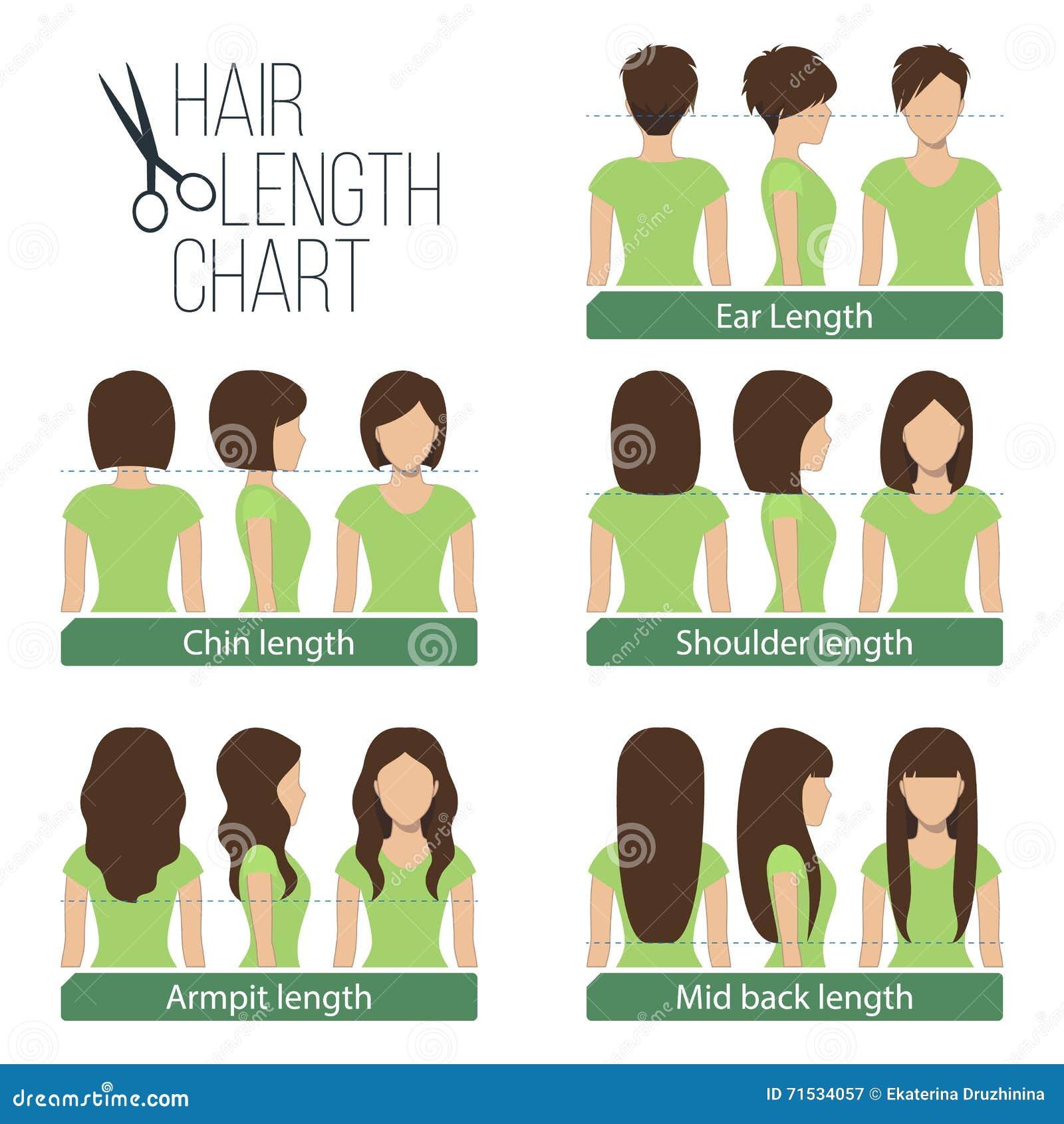 Hair Length Chart Stock Vector