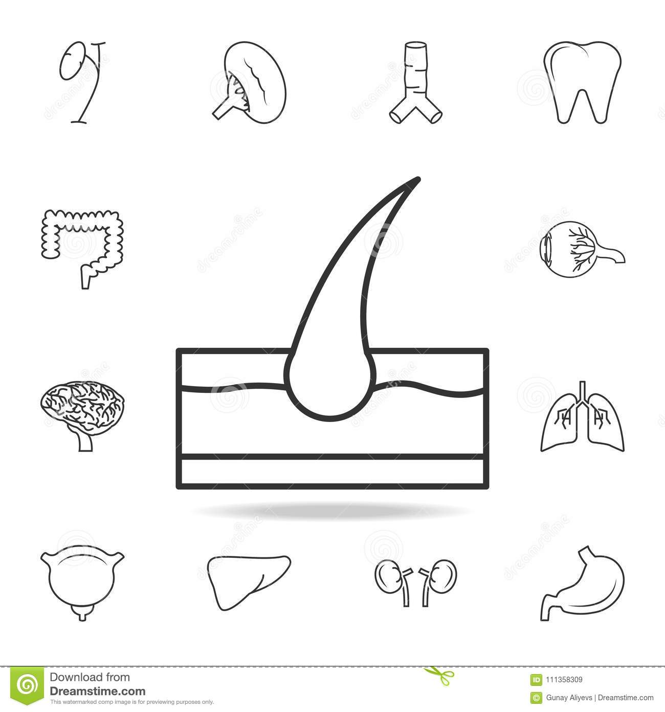 Hair In Skin Icon Detailed Set Of Human Body Part Icons Premium
