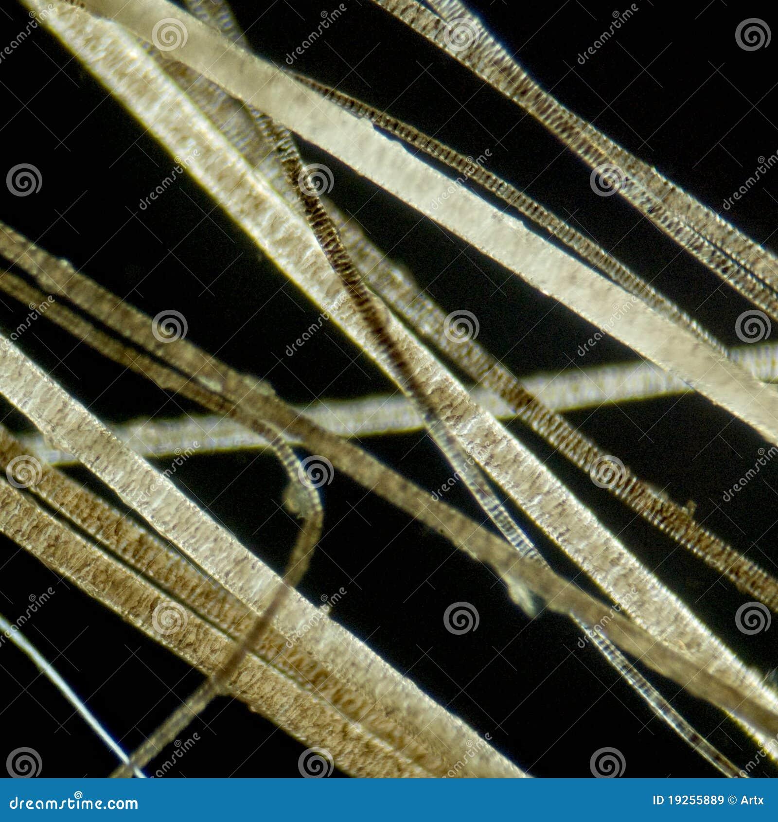 Hair under microscope
