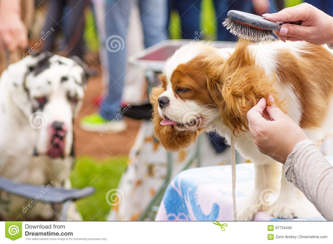 Haircut Dogs Professional Master Stock Photo Image Of Groomer