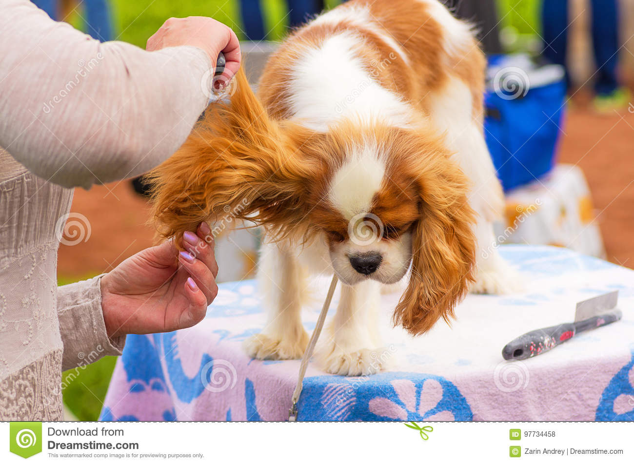 Haircut Dogs Professional Master Stock Photo Image Of Professional