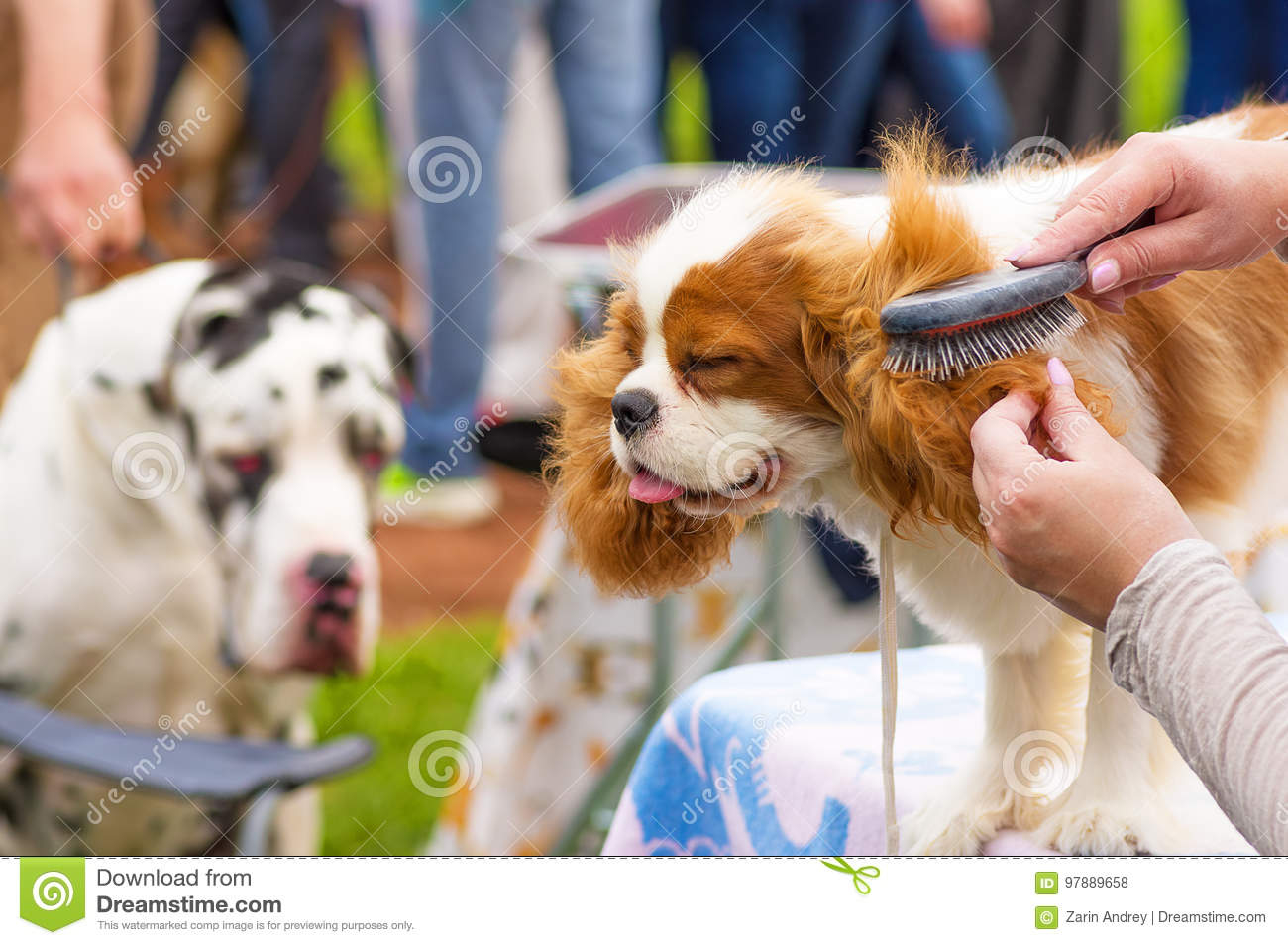 Haircut Dogs Professional Master Stock Photo Image Of Veterinary