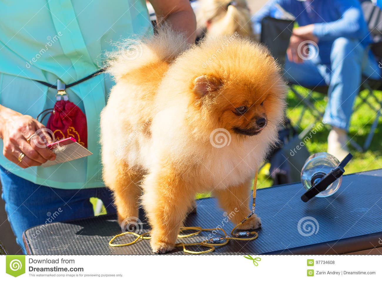 Haircut Dogs Professional Master Stock Photo Image Of Hair Animal