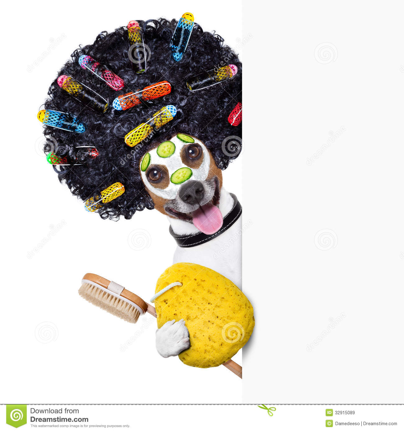 Hairdresser Dog With Curlers Royalty Free Stock Photo