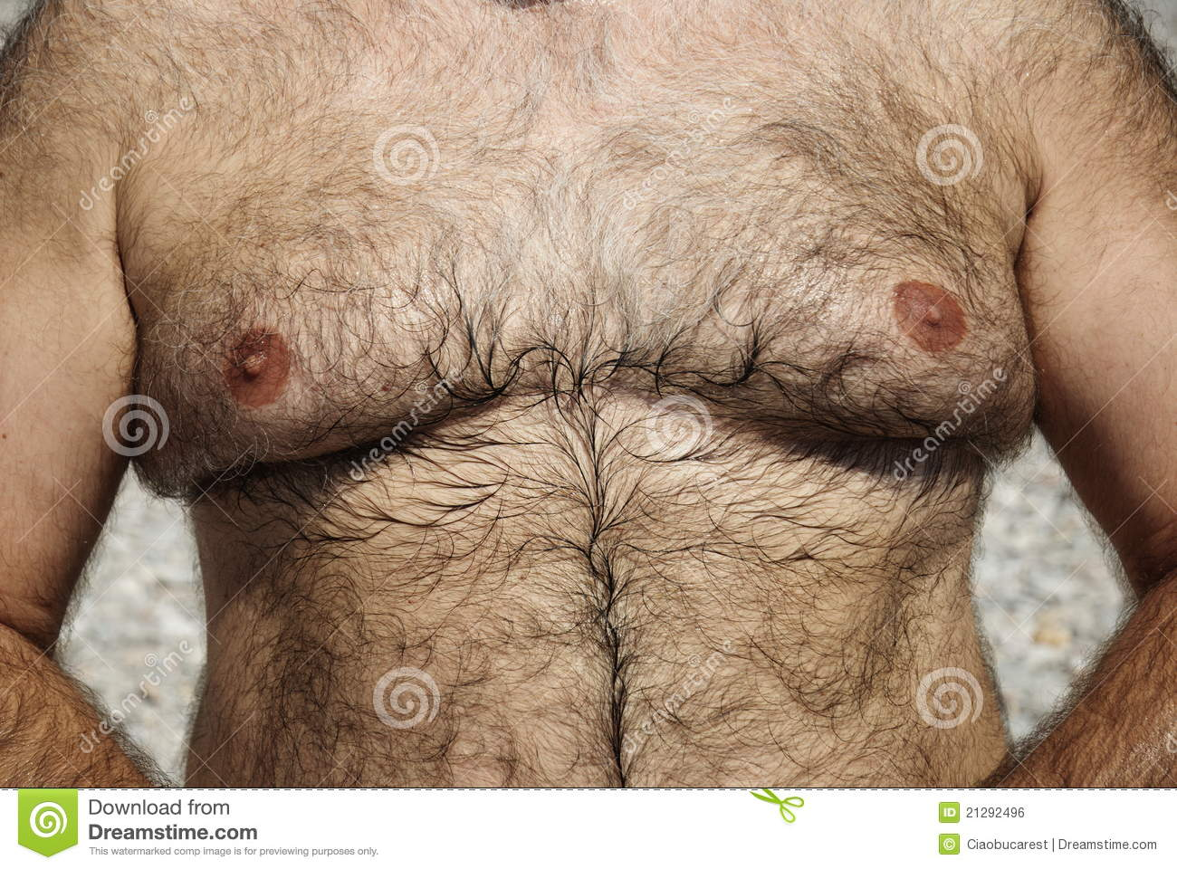 Hairy Chest Of Overweight Man Royalty Free Stock Image