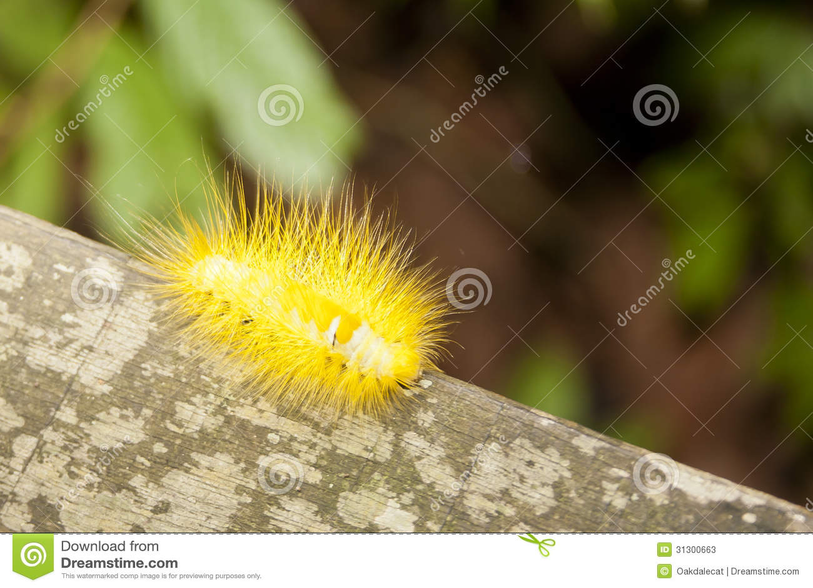 caterpillar hairy yellow