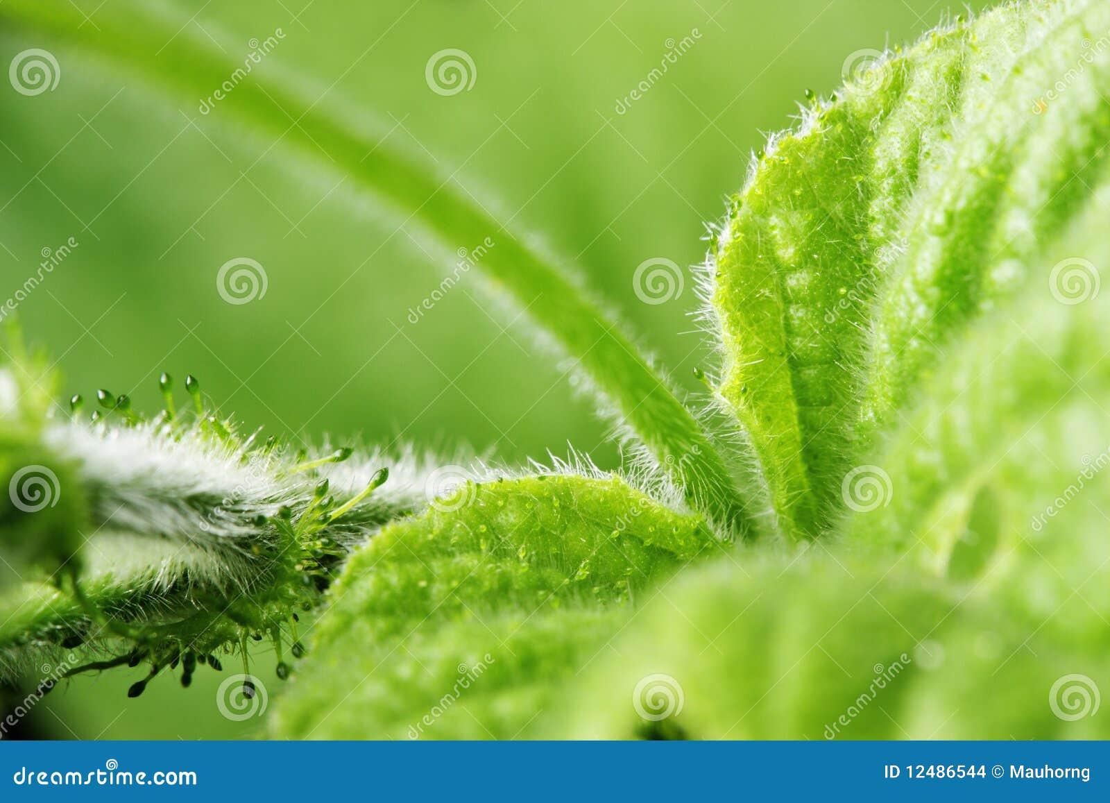 Green Leaves Teen Dreams 61