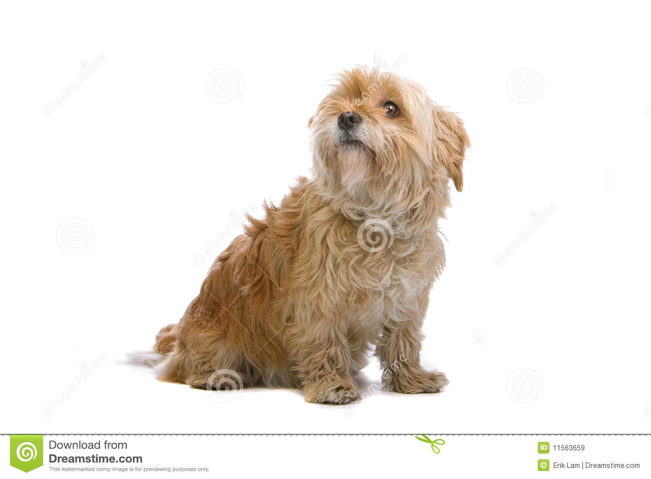 Hairy Dog Breed Name