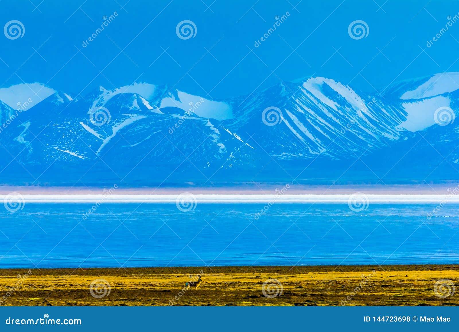 Hala Lake och för snö korkad Qilian bergskedja, Qinghai-Tibet Platea, Kina