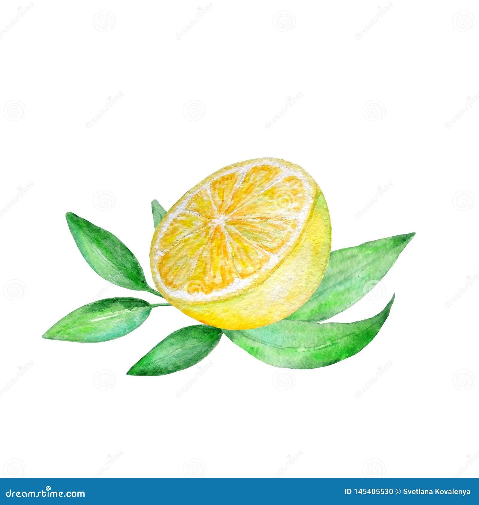 Zu schlanke grüne oder gelbe Zitrone