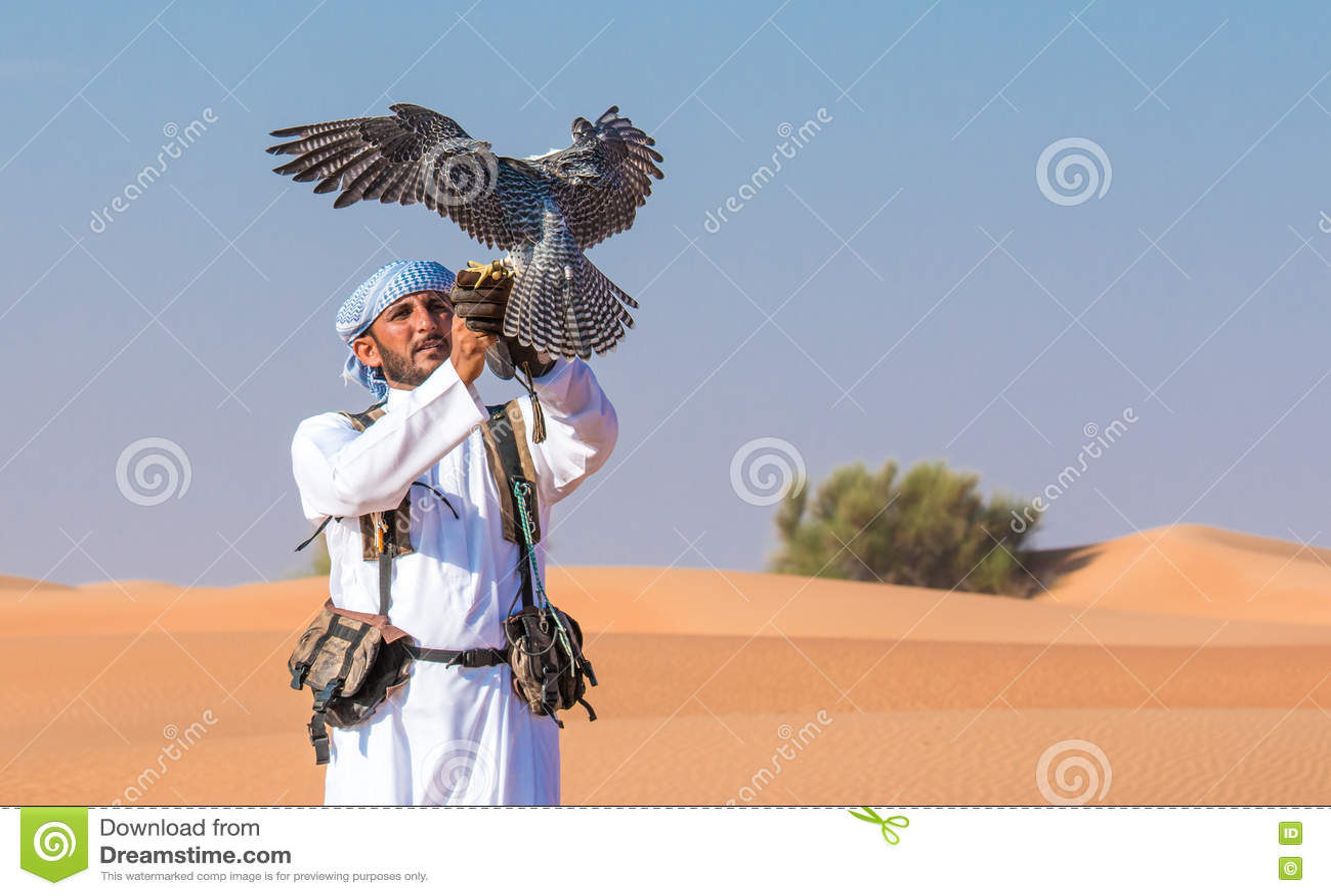 Halcón masculino del saker durante una demostración del vuelo de la cetrería en Dubai, UAE