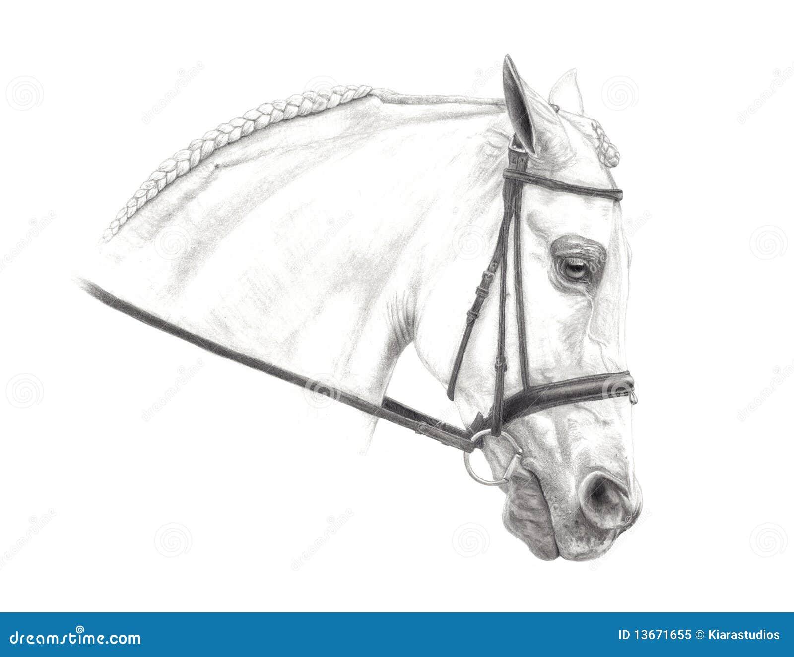 Half Arabian Pencil Drawing