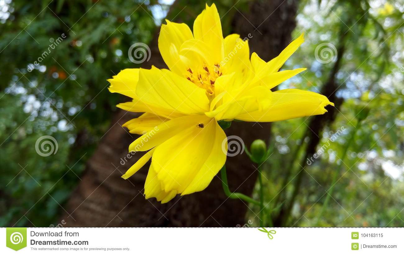 The Half Bloomed Yellow Colour Flower With Red Sprinklers Stock
