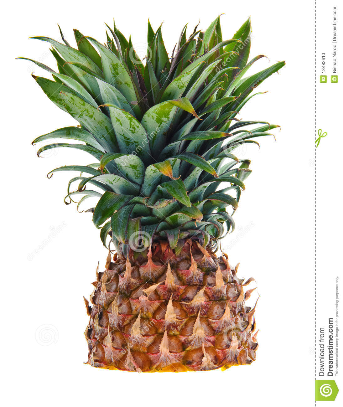 Find great deals on eBay for white pineapple. Shop with confidence.