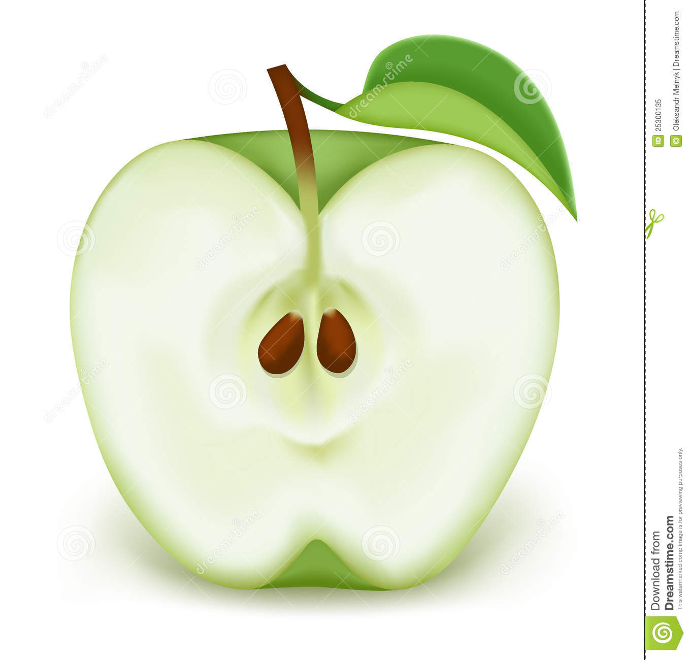 Vector illustration. Photorealistic. Half a green apple on white.