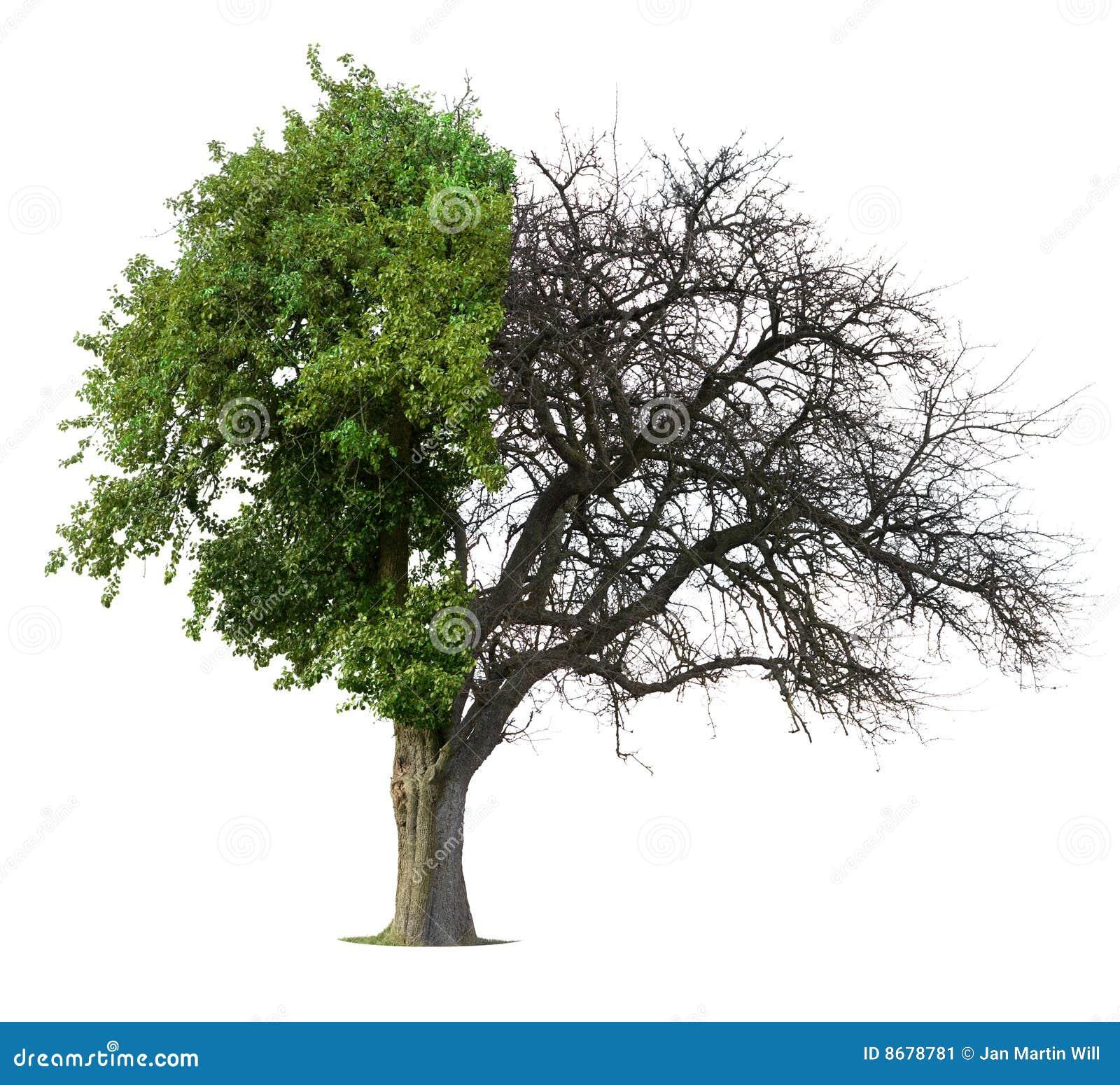 Half green half bare tree