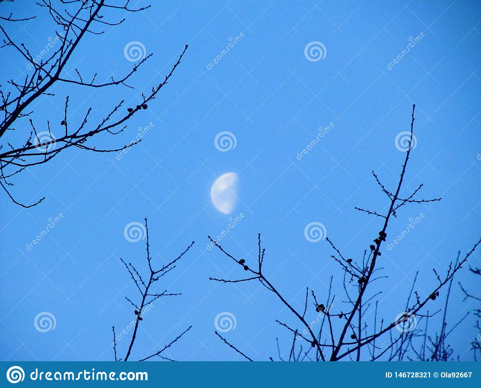 Half of the Moon