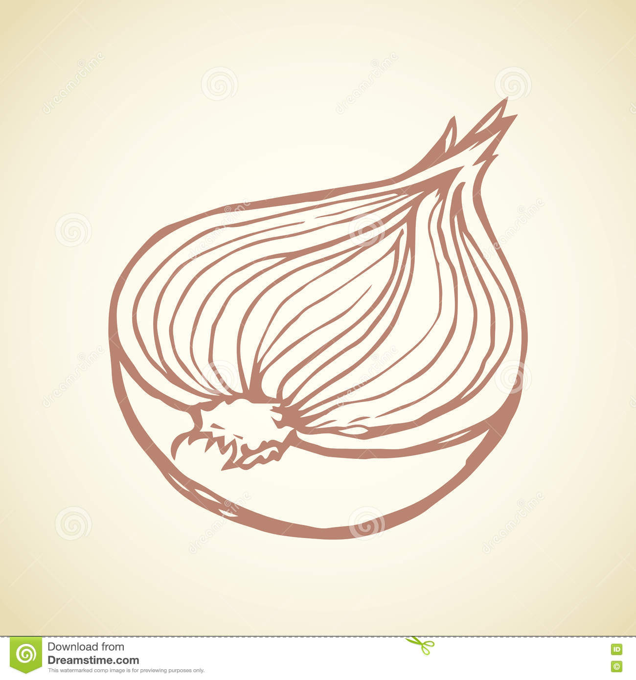 Half of onions. Vector drawing