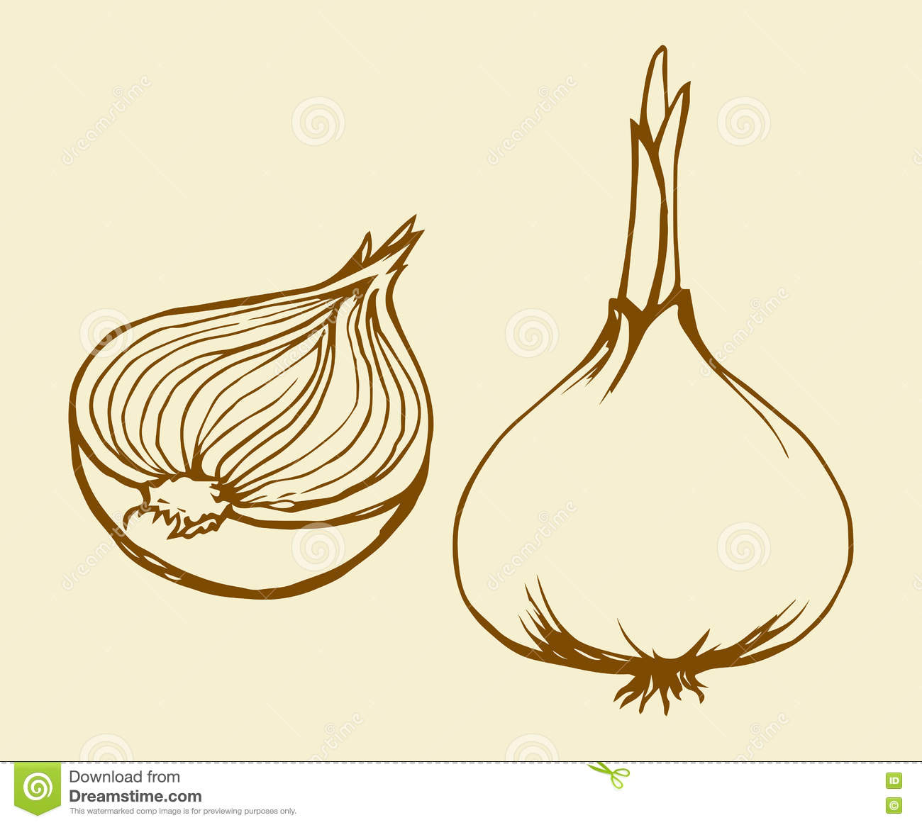 Onion Outline Related Keywords & Suggestions - Onion Outline Long Tail ...