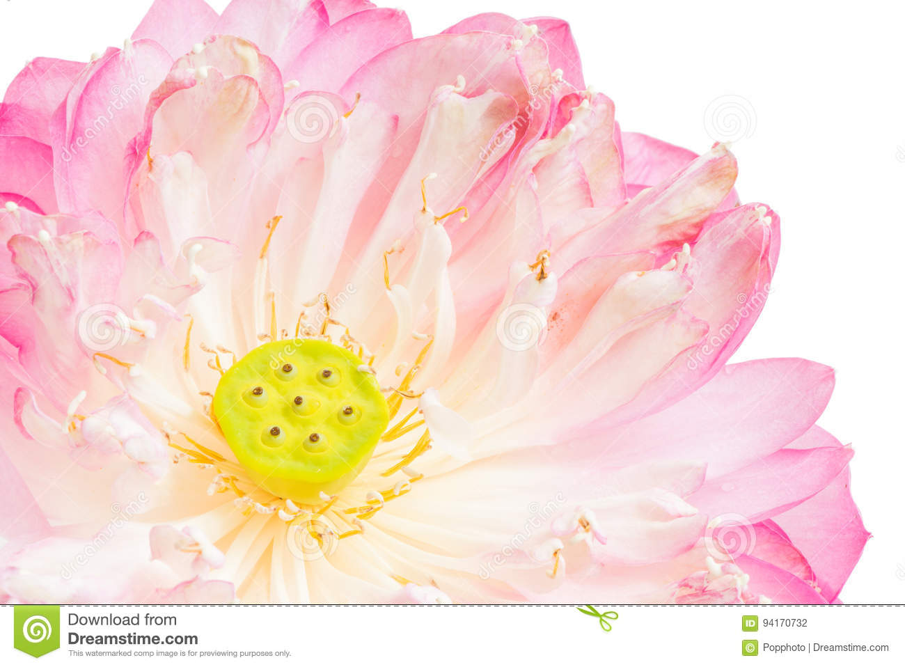 A half of open lotus flower stock photo image of serene symbol royalty free stock photo izmirmasajfo Gallery