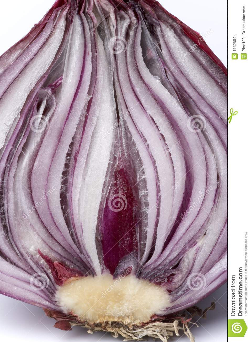 Half Red Onion On White Background Stock Images - Image ...