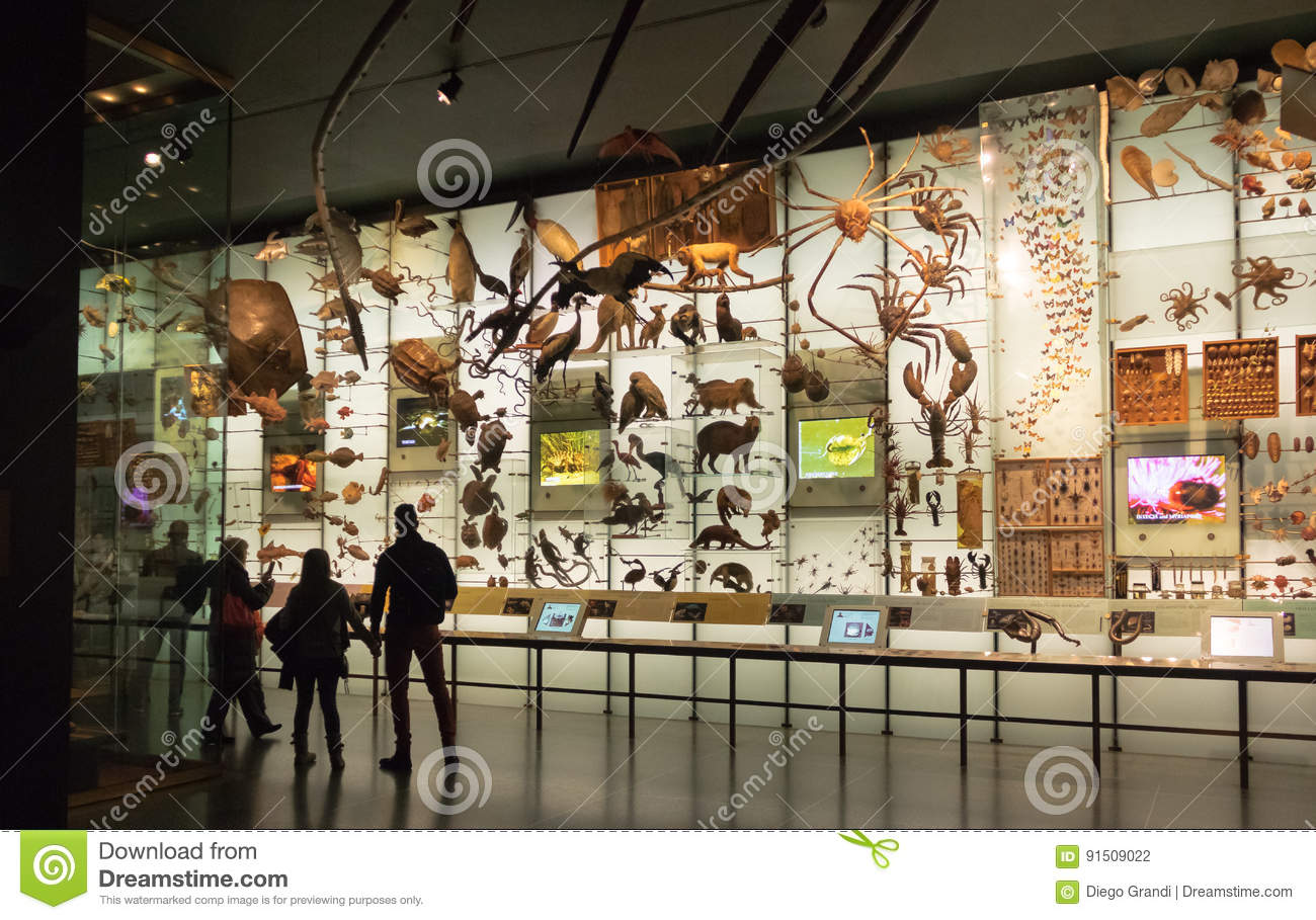 Foyer Museum Usa : Hall of biodiversity at the american museum natural